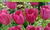 Baumax katalog vrt i cvijeće 2012