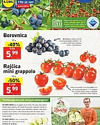 Lidl katalog tržnica do 5.6.